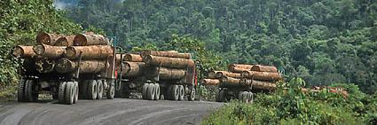 Bedeutung des tropischen regenwaldes